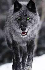 The wolf next door (camren-werewolf story)  by CamrenIsDating