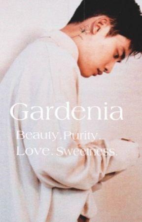 Gardenia by softninii