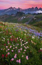 Mystical Field by indigokidaesthete