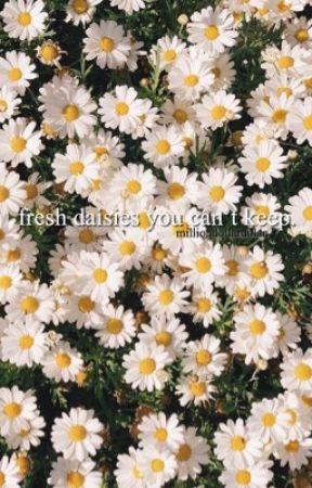 fresh daisies you can't keep ;; gd by milliondollardolan