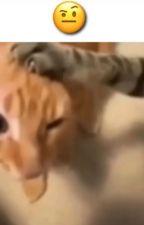 My last hope (Mastermind makoto x Byakuya) Completed! by Sayonara_AshLynx