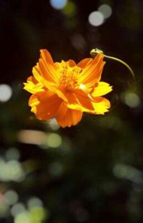 Salvation by heather_hyacinth