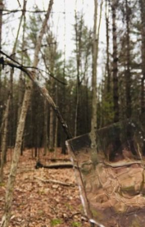 The Woods by firephoenixmn