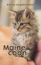 °MaineCoon (OPEN) by kittiesorganization