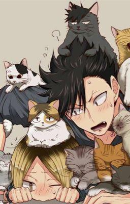 Đọc truyện [KuroKen][HQ!!] Mèo đen và mèo Pudding