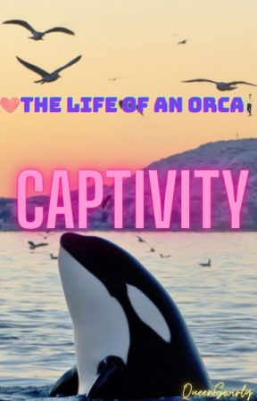 The Life of an Orca: Captivity by QueenSwirly