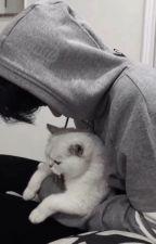 Kuroo's Kitten || Kuroo Tetsurou by aestheraki