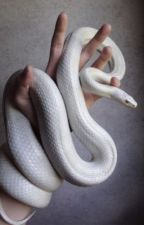 The Slytherin Snake (Drarry)  by MoonStoneAlpha