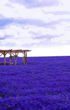Dreamwalking in Lavender Fields  by sofyzin