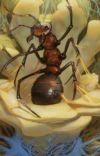 Eu renasci como uma Formiga (Chrysalis) cover