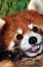 Kırmızı Pandalar by MarasistanliDondurma