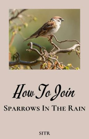 How To Join Sparrows In The Rain by SparrowsInTheRain