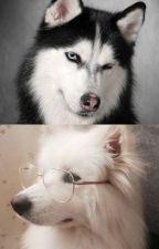 [Chu Bạch / Minh Khởi] Ế, con thích Husky sao? by VicyVN