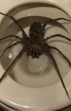 There's a spider in my toilet help by _Black_thewolf_
