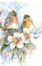 Dua burung yang bertemu di sore hari by ChelleMita