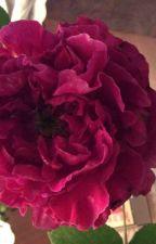 Beauty's Gift by Ladysausten