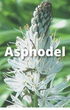 Asphodel by JustSomeKashikizu