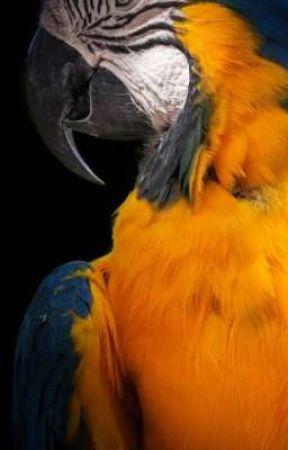 Papağan  by 4kediannesi