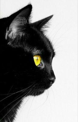 Đọc truyện [IDV][VicLu] Mèo hoang