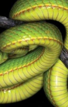La Venganza de la Serpiente  by Umychan12