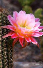 Desert Blossom by Chimera12345