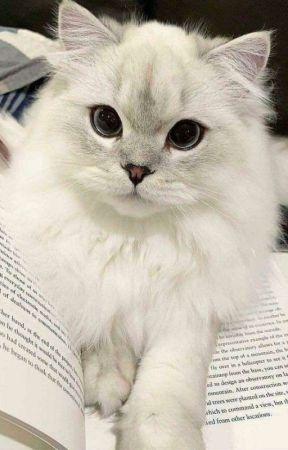 Twister / CatGirl Tuana by nefertemwu