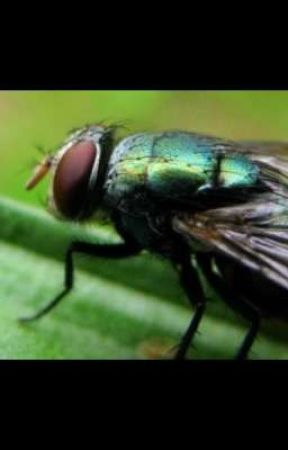 In memory of Steve the fly by Bly4at6