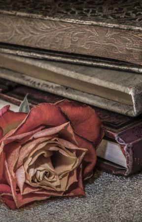 Egy rózsa naplója by beragre