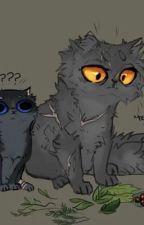 //Warriors Cats// Ciekawostki✨// by xLolitekx109x