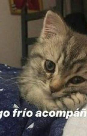 gatitos con frases lindas by biancaricardo00
