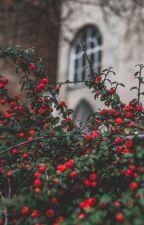 Wall Garden by Mx_Amabilis