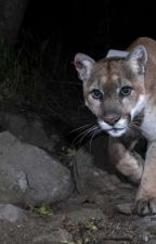 breeding the mountain lion's mate by Lizard1699