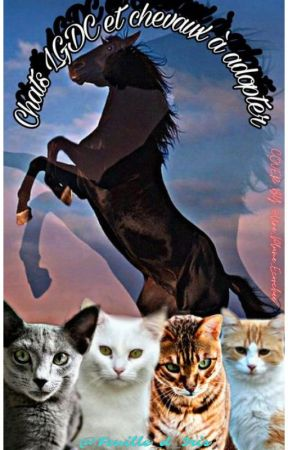 Chat LGDC et chevaux à adopter by Feuille_d_iris