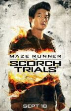 The Scorch Trials (Minho X Reader) by Maze_Wolf_Mcu_