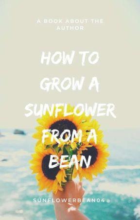 How To Grow A Sunflower From A Bean by SunflowerBean04