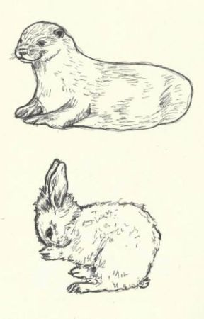 The Bunny and The Otter by adrienneisntmyname