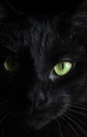 killer cat by kaylaaeilish