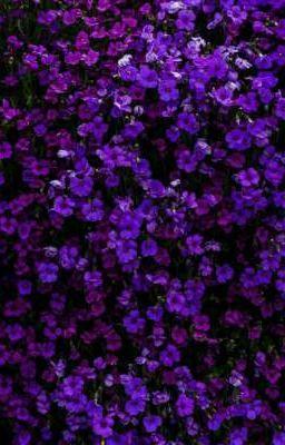 Đọc truyện 「 gducky x rtee 」Bỉ ngạn hoa