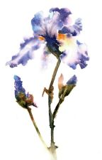 Iris . Blindinnit AU [DSMP] by asheislost