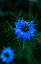 Blue Light  by Forelle1234
