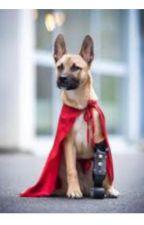 Super hunden  by funnymanornot152