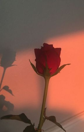 Red Rose by Katia_LeBeech