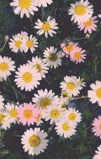 dandelies by pansexualwithnobrim