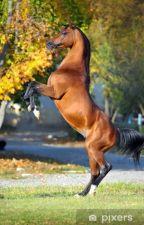 HORSESHOE by Siakon123