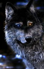 avengers x reader by werewolfqueen20