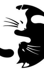 Cat-astrophe by PokePotterHeadfan