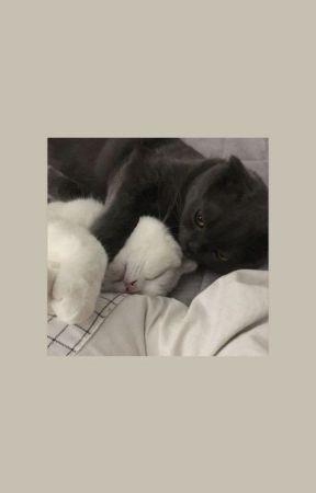 warrior cat adoptables ! by toadskipp-