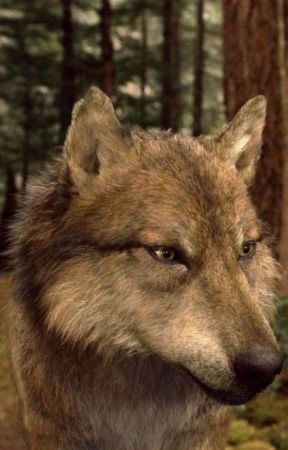 Lies Of The Unwanted (Seth Clearwater Fanfic) by NormandyWright