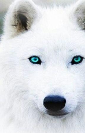 the blue eyed white wolf from the moon  ( kakashiXoc) by narutoninja14