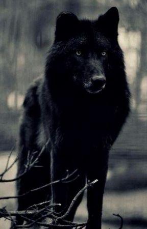 Fire & Ice \\ A Wolf Roleplay by YerLoclPringlesDealr